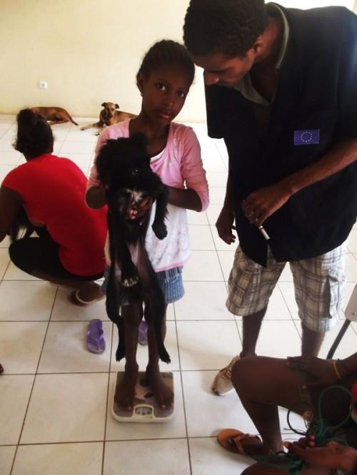 Una bambina pesa il suo cane per calcolare l-anestesia per la sterilizzazione