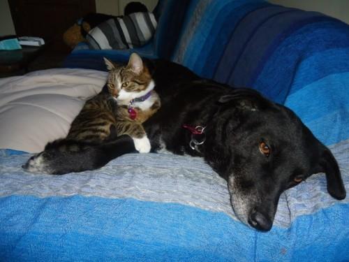 Juve sul suo divano a Bruxelles, in compagnia del gattone adottato in Serbia, anche lui... altro che  fortunello...