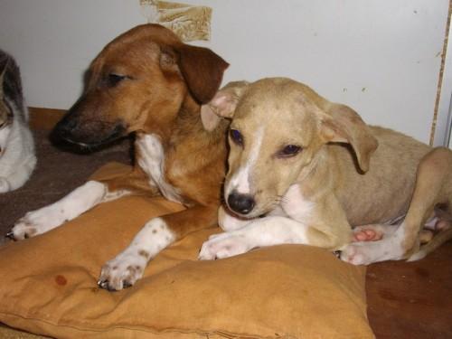 VIola, a destra, con la sorella Kiara, dopo qualche giorno nel pulito e con la pancia piena