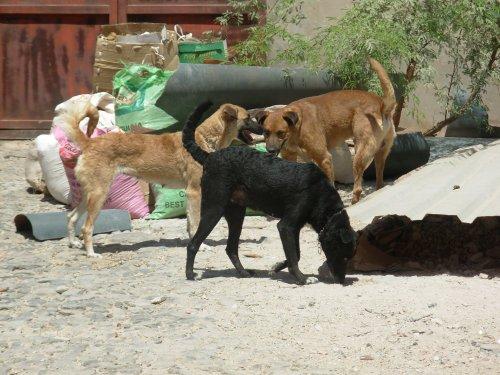 """Juve con Mel e Pichouli, i suoi inseparabili amici, che sono tuttora ospitati presso il rifugio di SIMABO. Sullo sfondo, i resti dei 16 camion di immondizia che ingombravano la cosiddetta """"sede nuova"""" prima del nostro ingresso."""